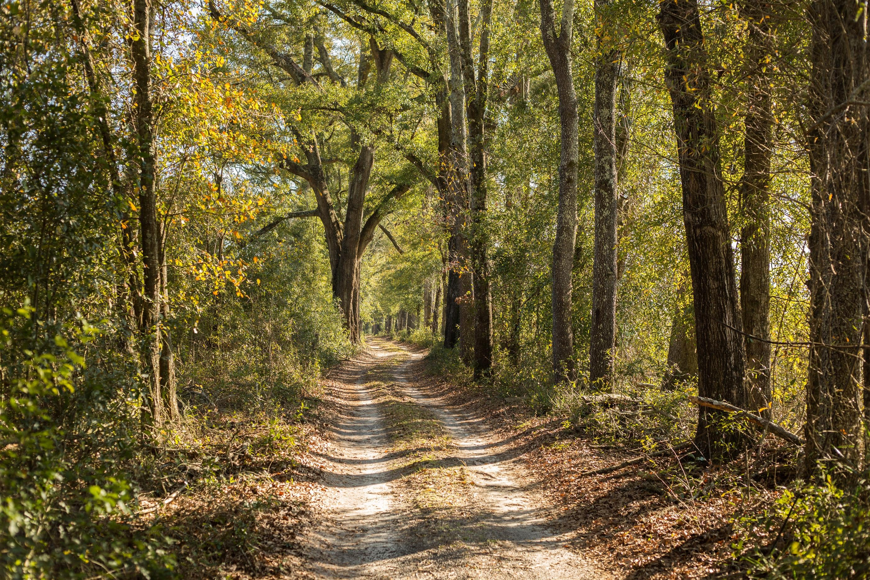 Tree lined driveway of N FL Land for sale