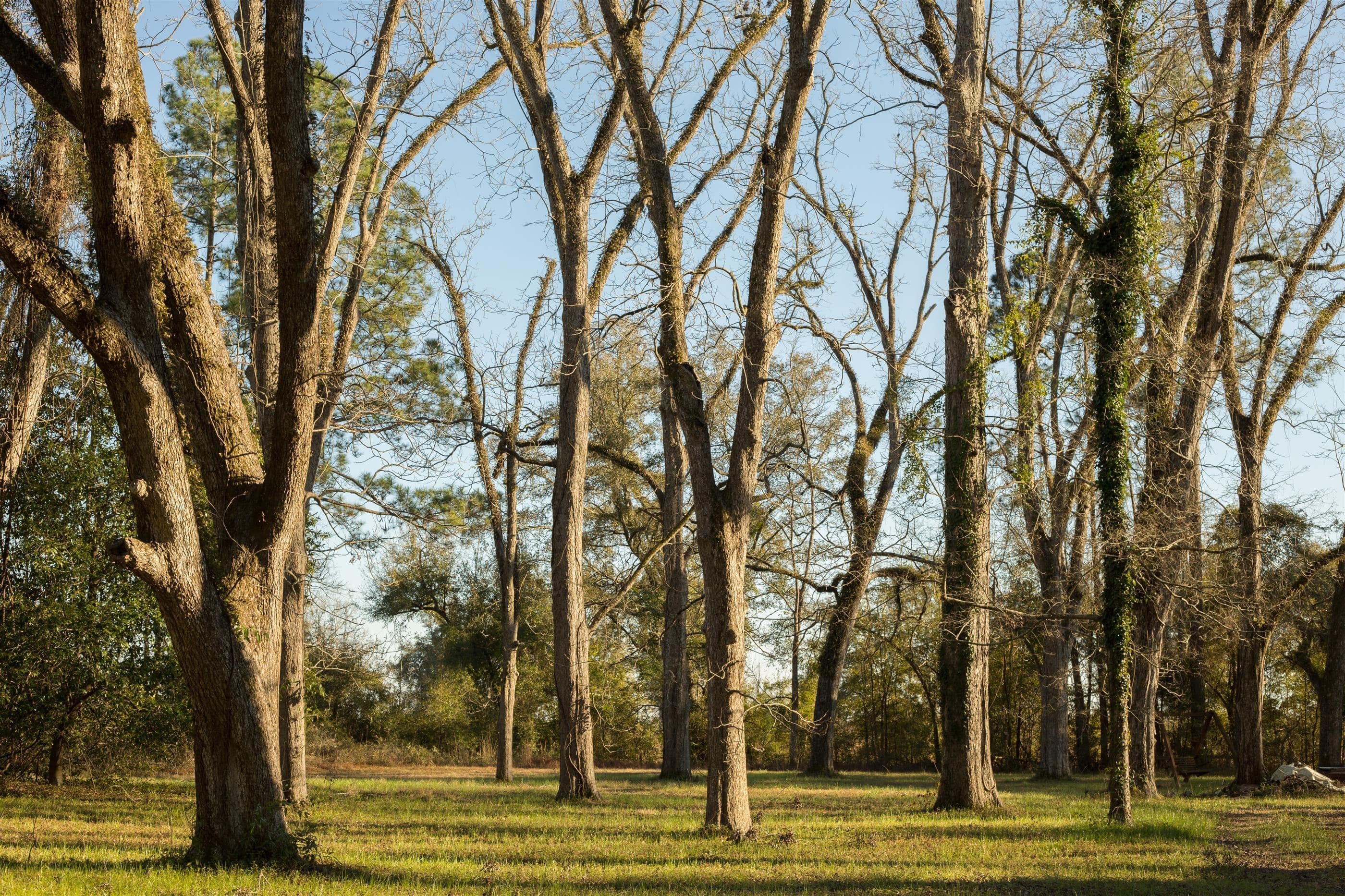 Pecan Trees on North FL Land for sale