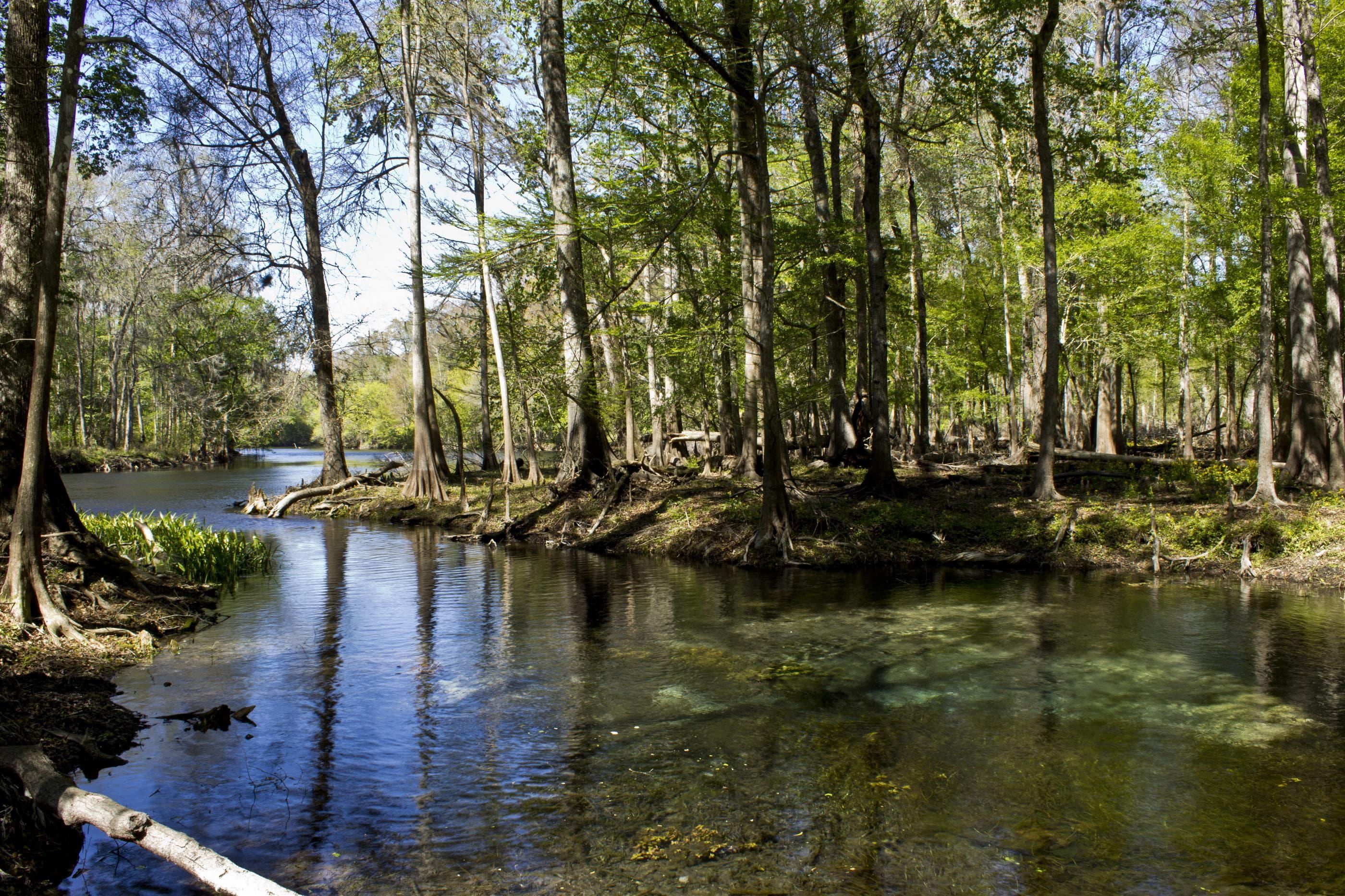 Santa Fe Springs property in Columbia County FL