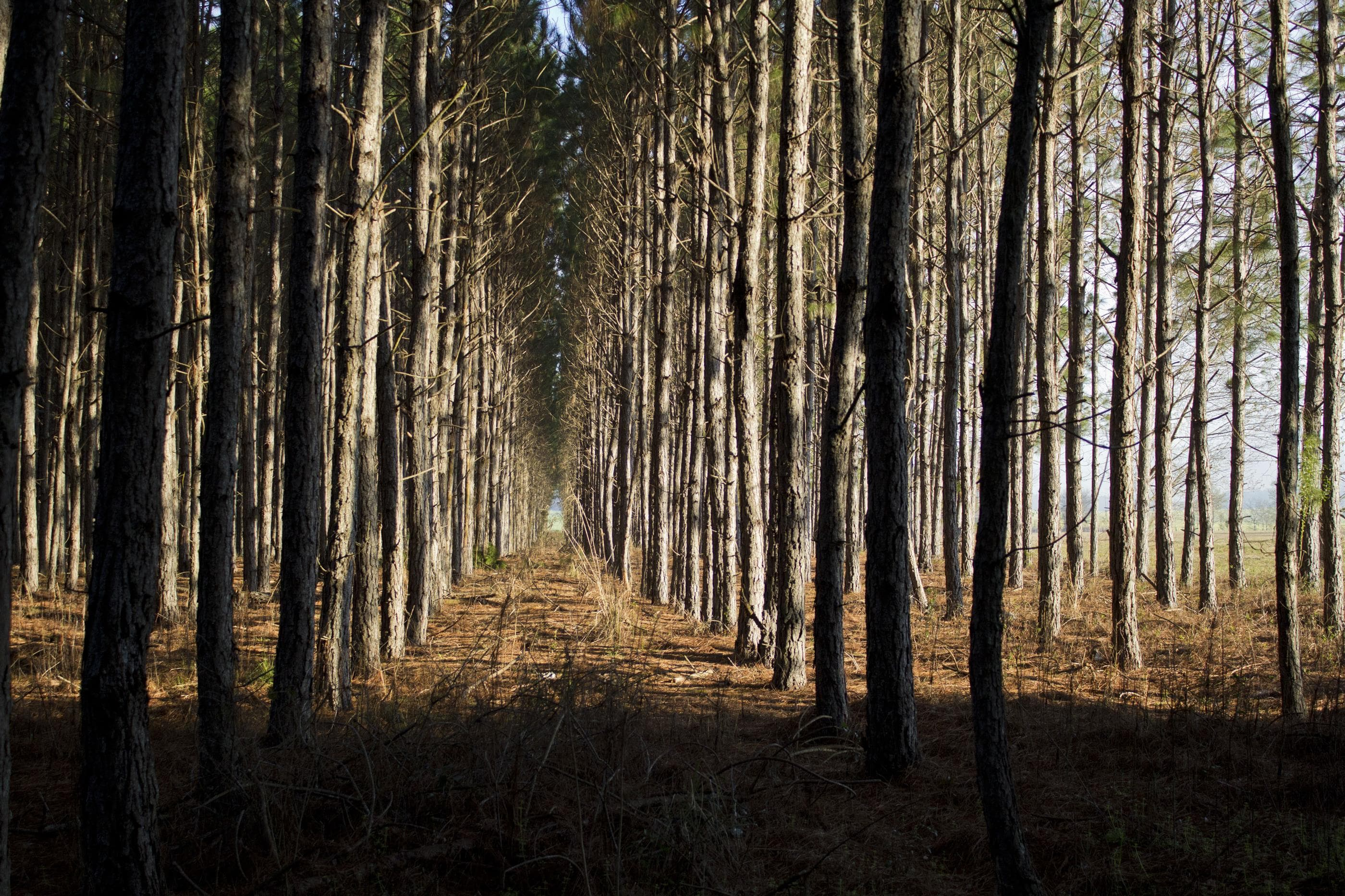 Timber property for sale in Suwannee County FL