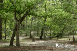 Royal Springs Picnic Area under big oak tree canopy