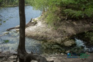 Royal Springs - spring run to Suwannee River