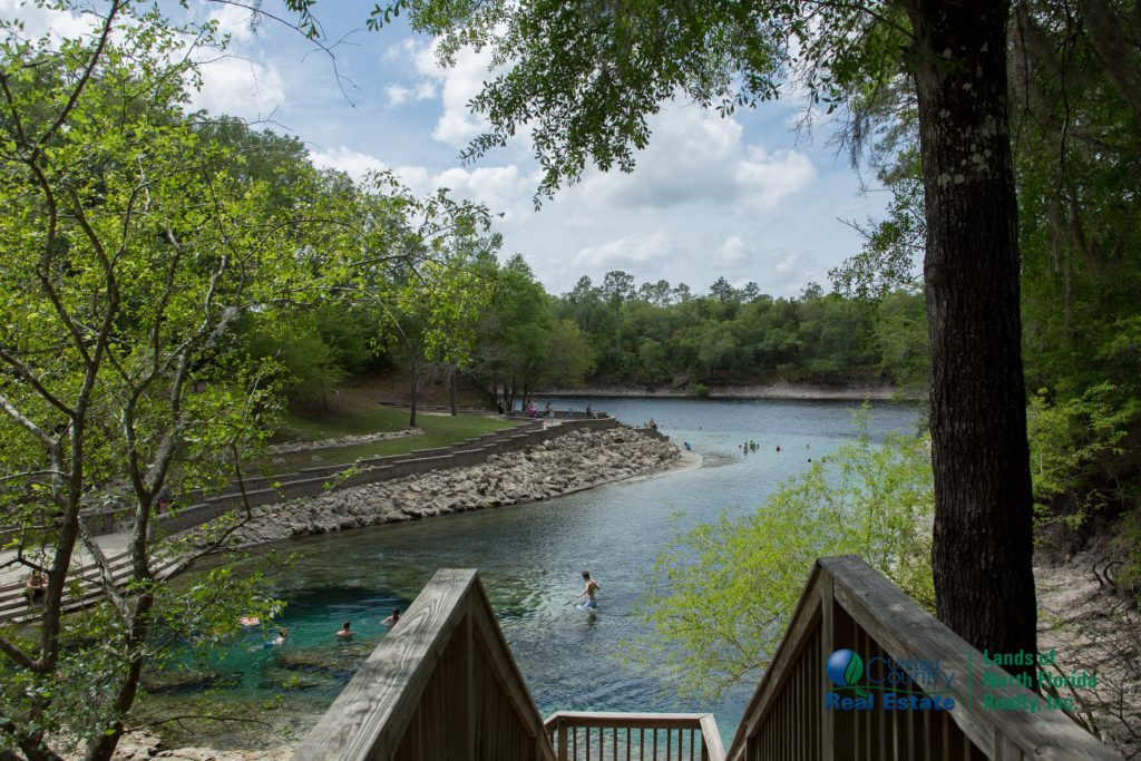 View from the top of the main board walk over looking the length of Little River Springs pool and spring run into the Suwannee River