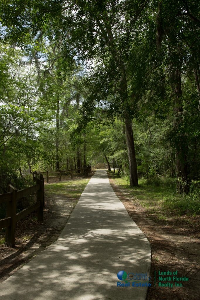 One of the many tree covered pathways at Little River Springs