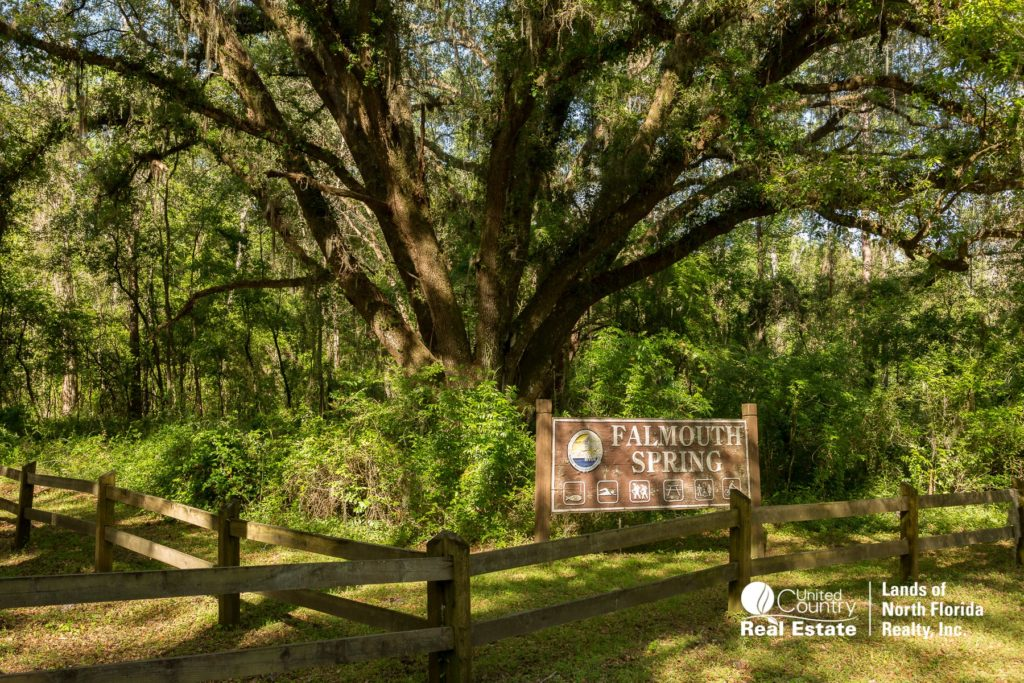 Falmouth Springs entrance sign with big oak tree in back ground