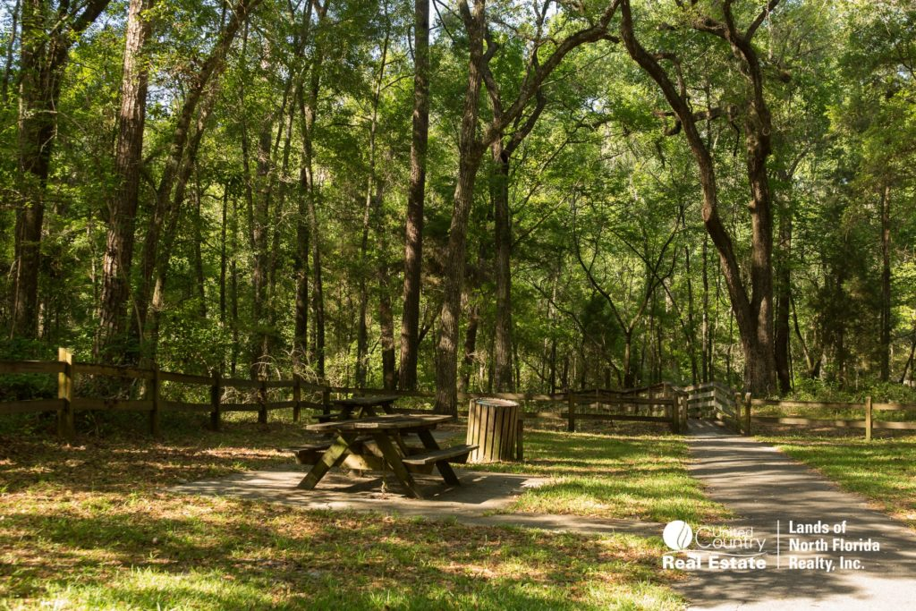 Falmouth Springs picnic area with table