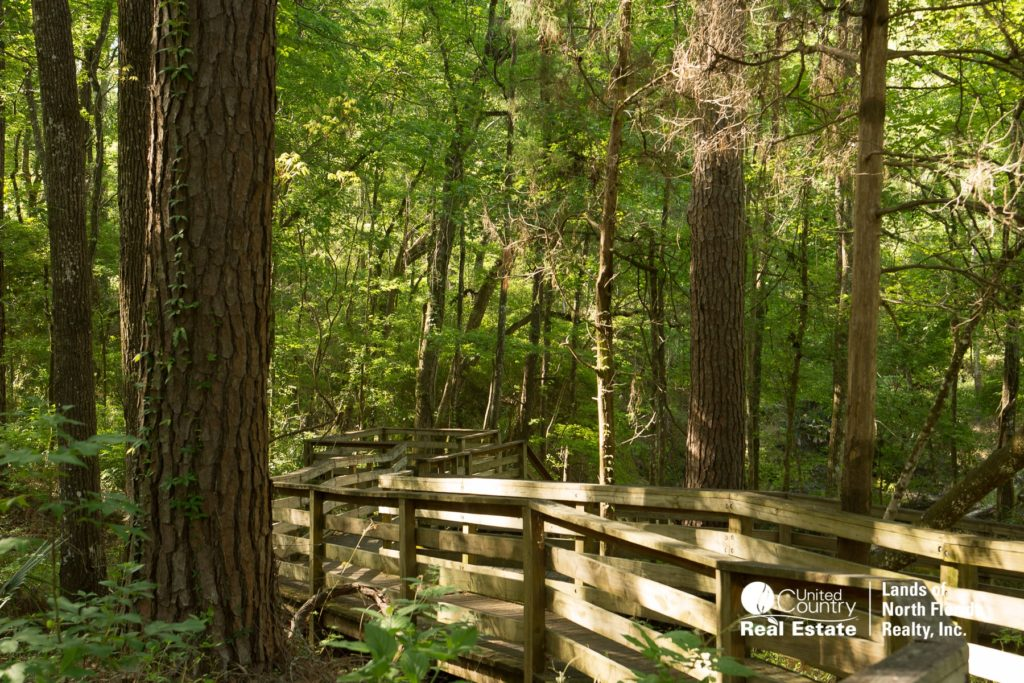 Falmouth Springs board walk down to spring