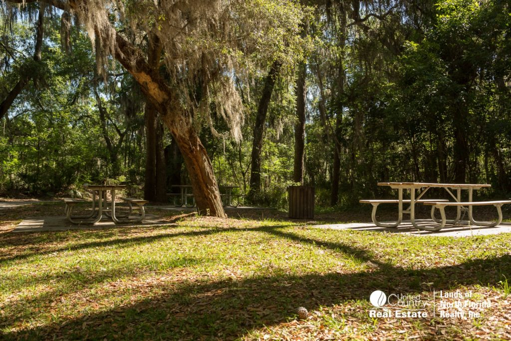 Suwannee Springs - Picnic tables and picnic area