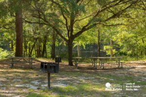 Scattered oak trees, camp grills, and picnic tables in an area at Madison Blue Spring State Park