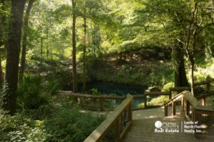 Board walks, trees, and clear blue water down in Madison Blue Spring