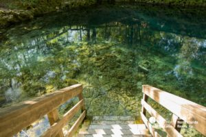 A photo looking down the wooden stairway with railings, leading right into the clear blue water of Madison Blue Spring