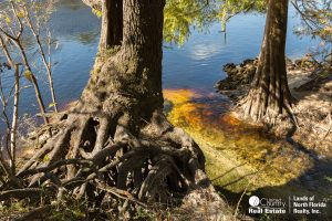 Spring water meets the Suwannee River at Charles Spring