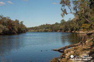 Suwannee River at Charles Springs