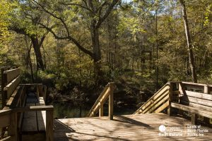 Wooden steps leading down into Peacock Slough and Peacock Springs complex