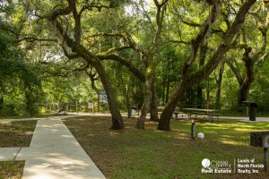 Towering oak trees over picnic area