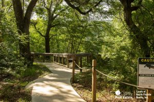 Concreted side walk to boardwalk under towering oak trees