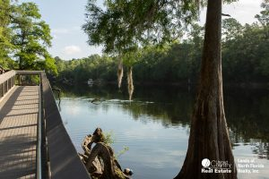 Suwannee River from a board walk at Lafayette Blue Springs Park