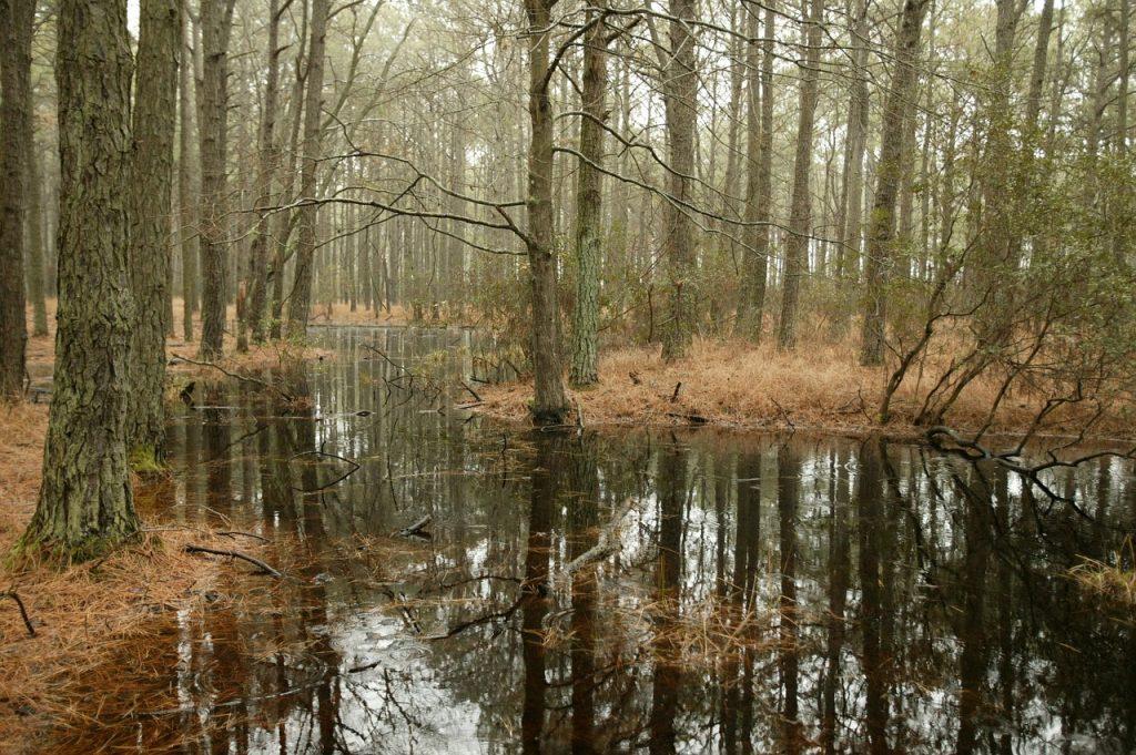 Swampy Wetlands